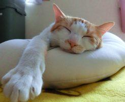 トルコリラ円スワップ生活-睡眠